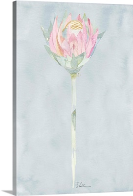 King Protea Watercolor Flower Blue