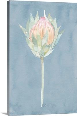 King Protea Watercolor Flower Cornflower Blue