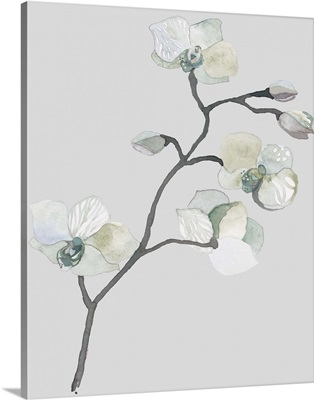 Orchid - Blue on dove gray
