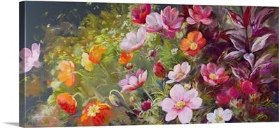 The Cut Flower Garden - Sunshine