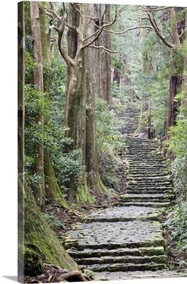 A nature trail in southern Japan, Kii peninsula close to Nachi falls