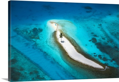 Aerial View Over Island With Lone Palm Tree, Maldives, Indian Ocean