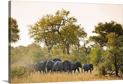 Africa, Namibia, Caprivi, Herd of elephants in the Bwa Bwata National Park