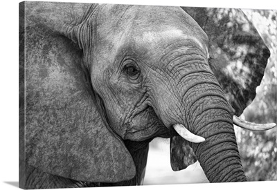Africa, Southern Africa, African, Sabi Sand Private Game Reserve, Young Elephant