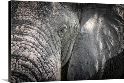 Africa, Tanzania, Tarangire National Park, An Elephant Close Up, Detail Of The Head