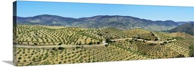 Almond Trees. Barca d'Alva. Alto Douro, Portugal