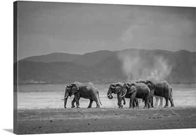 Amboseli Park, Kenya, Africa A family of elephants in Amboseli Kenya