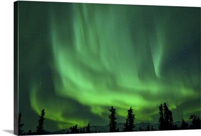 Aurora Borealis at Chena Hot Springs, Fairbanks, Alaska