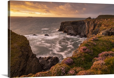 Beautiful Evening Sunlight On The Cornish Wildflower Cliffs, Cornwall, England