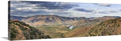 Big areas of olive groves surround Barca d'Alva, Tras os Montes. Alto Douro, Portugal