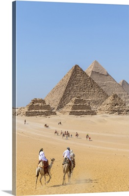Camels Train At The Pyramids Of Giza, Giza, Cairo, Egypt