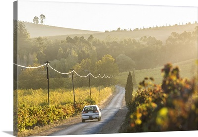 Car and Road through Winelands and vineyards, Western Cape Province, South Africa