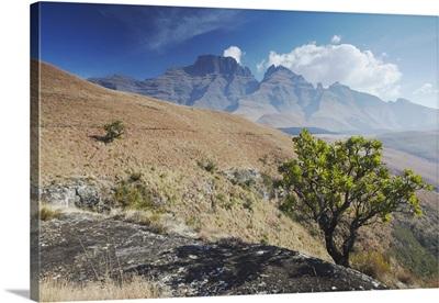 Champagne Castle in Monk's Cowl Nature Reserve, Ukhahlamba-Drakensberg Park