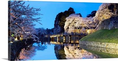 Cherry Blossom And Bridge At Hikone Castle, Hikone, Kansai, Japan