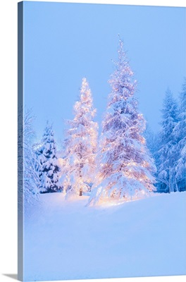 Christmas Tree Covered In Snow During A Snowfall At The Colle Vareno, Italy
