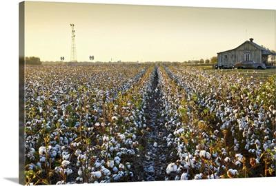 Clarksdale, Mississippi, Cotton Field, Delta