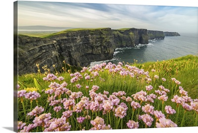 Cliffs of Moher with flowers on the foreground, Munster, County Clare, Ireland