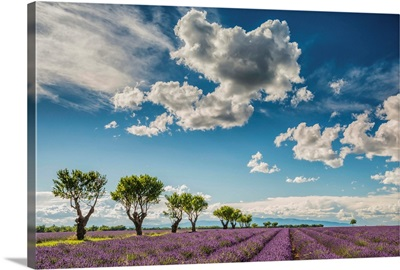 Cloudscape Over Lavender Field, Provence, France