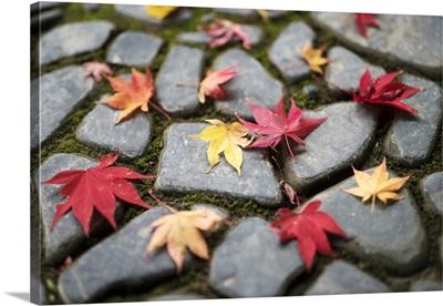Colorful Autumn Leaves At The Okochi Sanso Garden, Arashiyama, Kyoto, Japan