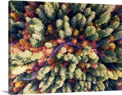 Colorful Forest In Autumn Season Brenta Valley In Madonna Di Campiglio, Italy