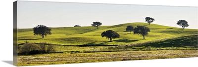 Cork trees in the vast plains of Alentejo, Portugal