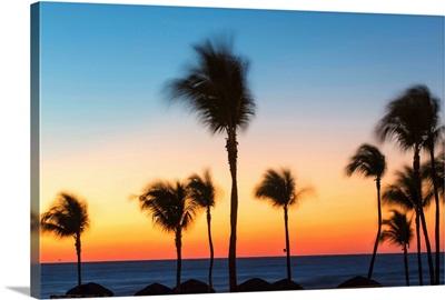 Cuba, Varadero, Palm trees on Varadero beach at sunset