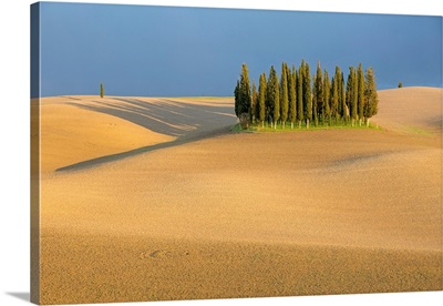 Cypress Trees In Val d'Orcia, Plowed Field And Stormy Weather. Tuscany, Italy