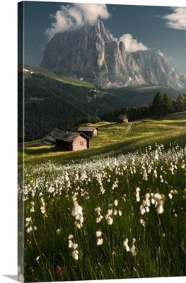 Daunei, Gardena Valley, South Tyrol, Dolomites, Italy, Europe, Flowering Meadows