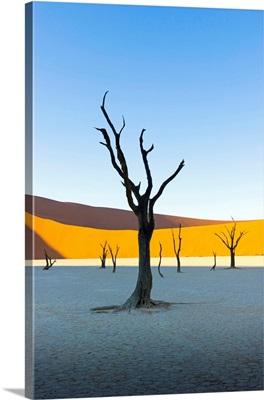 Dead Vlei, Sossusvlei, Namib desert at sunrise, Namibia, Africa