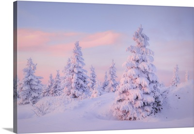 Deep Snow-Covered Spruces, Fichtelberg, Ore Mountains, Erzgebirge, Saxony, Germany