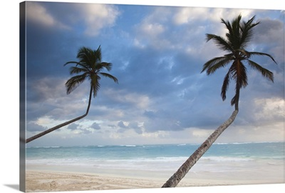 Dominican Republic, Punta Cana Region, Bavaro, Bavaro beach palms