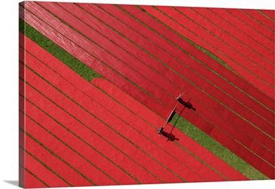 Drying Red Fabrics Under Sunlight, Narsingdi, Bangladesh