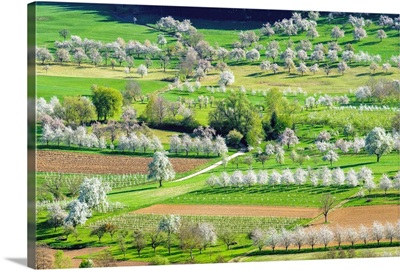 Eggenertal valley near the village of Obereggenen in early spring
