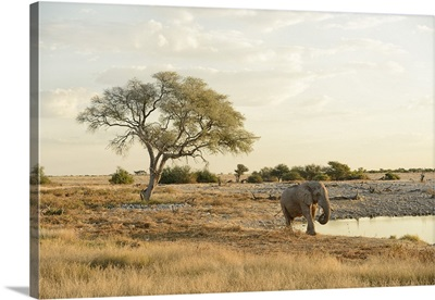 Elephant at waterhole, Etosha National park, Namibia, Africa