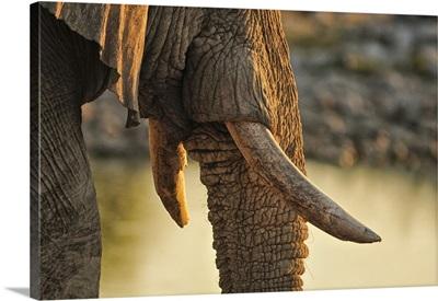 Elephant at waterhole, Etosha National parrk, Namibia, Africa