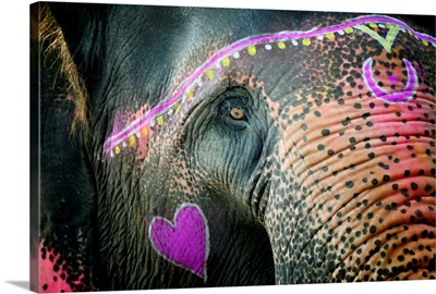 Elephant's eye. Sonepur Mela, India
