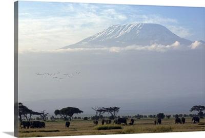 Elephants in front of Mount Kilimanjaro, Kenya