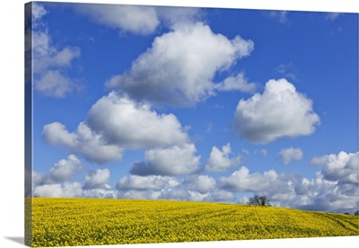 England, Hampshire, Rape Fields and Clouds