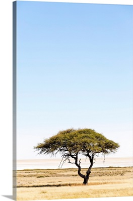 Etosha Pan, Namibia, Africa. Lonely tree
