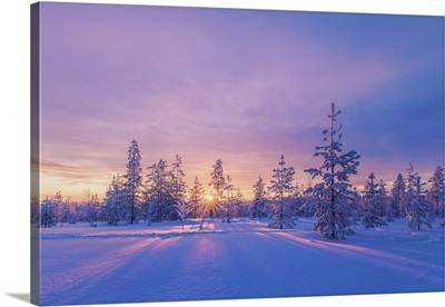 Europe, Lapland, Finland, Sunset On The Woods In Rovaniemi Area