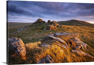 Evening Sunlight Glowing On The Granite Outcrops, Dartmoor National Park, Devon, England