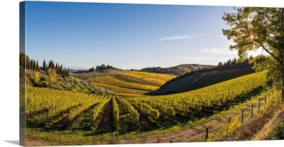 Farmhouse Surrounded By Vineyards. Gaiole In Chianti, Siena Province, Tuscany, Italy