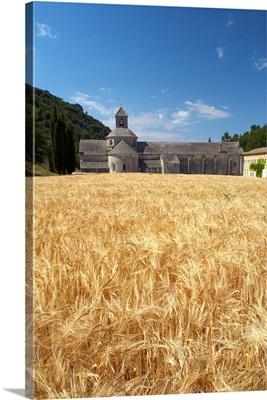 Field Of Barley And Senanque Abbey, Alpes De Haute, Provence, France