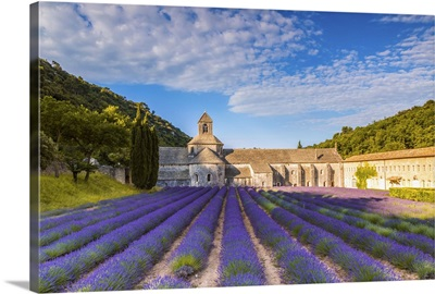 France, Provence Alps Cote d'Azur, Vaucluse. Famous Senanque abbey in the morning