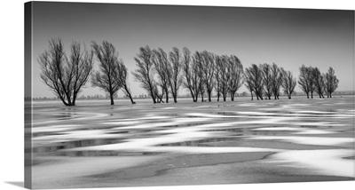 Frozen Floodwater, Biebrza Marshes, Poland