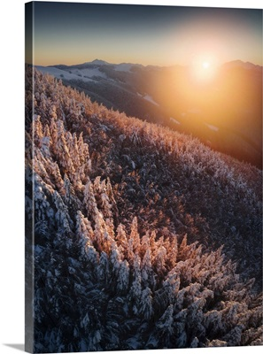 Frozen Forests Of The Appennines Near Passo Delle Radici, Tuscany, Italy