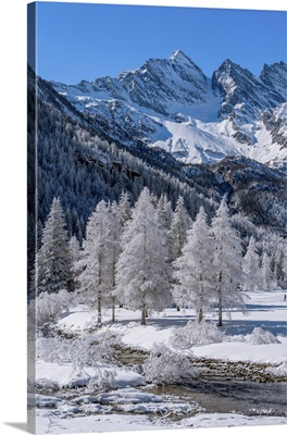 Frozen Trees With River On Ceresole Reale, Levanne, Orco Valley, Piedmont, Italy, Europe