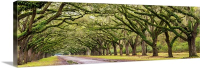 Georgia, Savannah, Entrance to Wormsloe Plantation