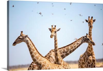 Giraffe in Etosha, Namibia, Africa