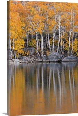 Golden fall foliage, Eastern Sierras, California